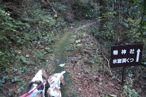 的山公園_渡会パーク00011