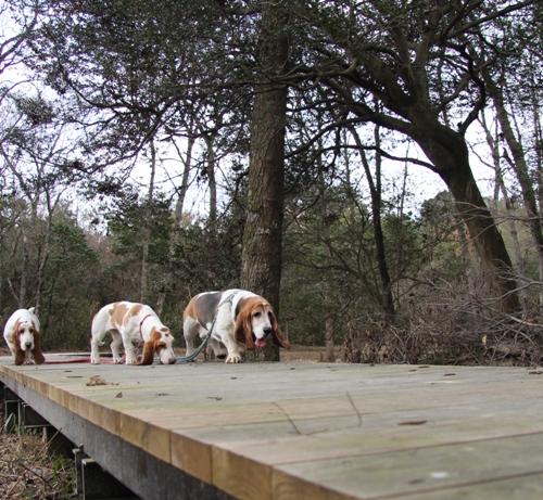 森林公園00018