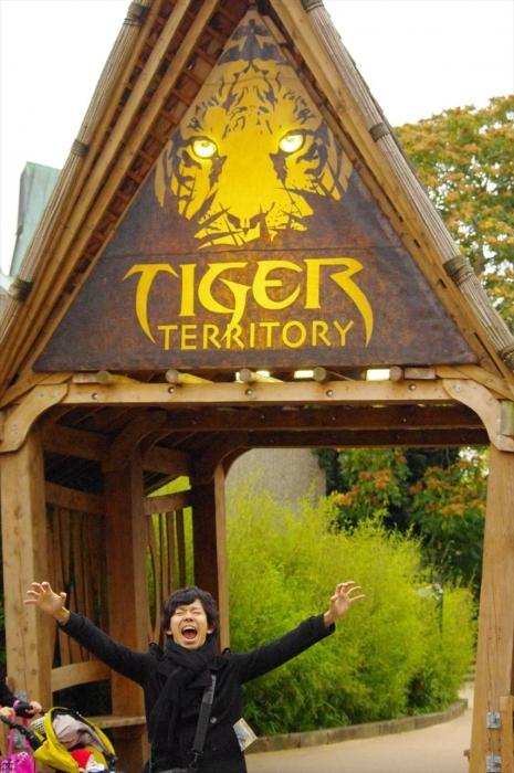 ロンドン動物園タイガー (3)