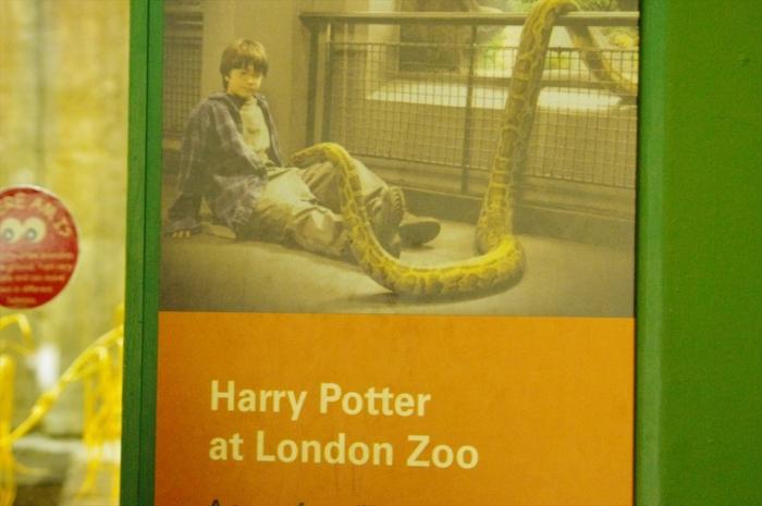 ロンドン動物園爬虫類館 (19)