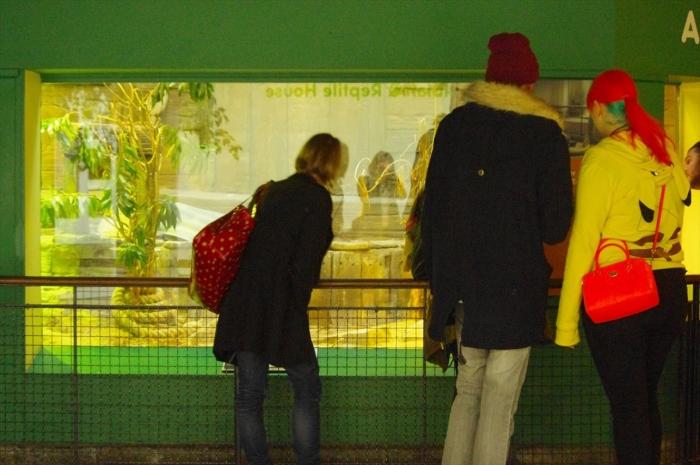 ロンドン動物園爬虫類館 (22)