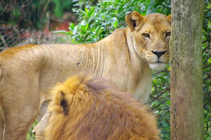 エンテベ動物園 (84)