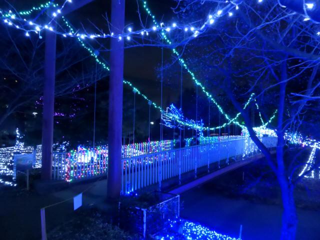 新池公園の吊橋1