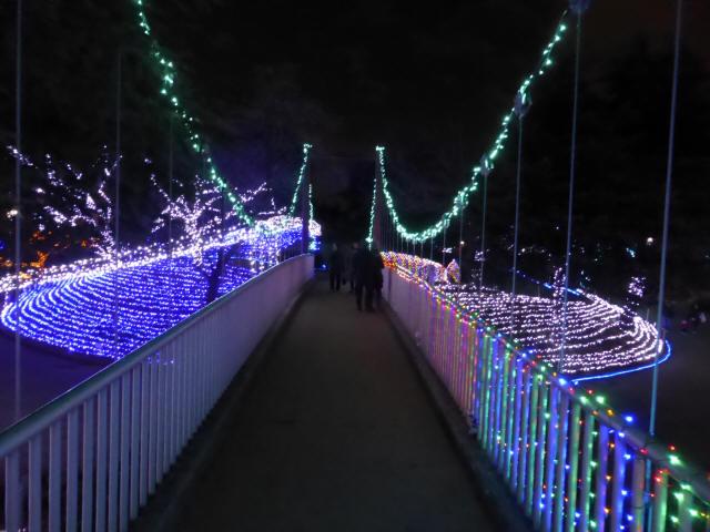 新池公園の吊橋4