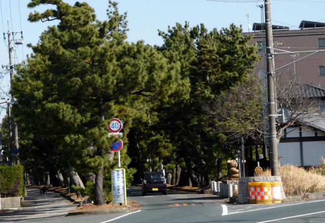 舞阪の松並木1