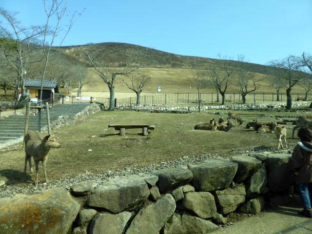 若草山11