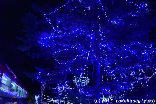 DSC_6809_01.jpg