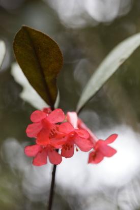16-02-17_mossiforest-malaysia-0029.jpg