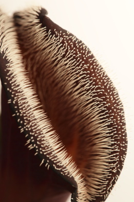 LLanos de challe-chili2_15-10-02-0516