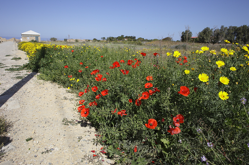 Paphos-cyprus_14-04-02_00003.jpg