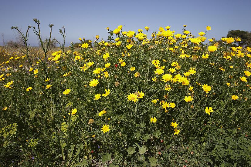 Paphos-cyprus_14-04-02_00108.jpg