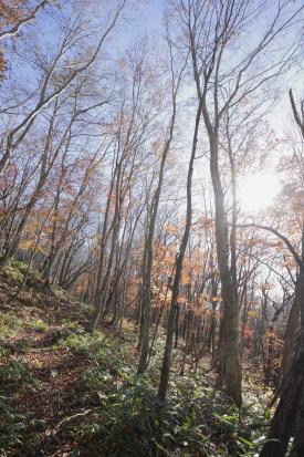 azumayasan-gunma_15-11-05-0565.jpg