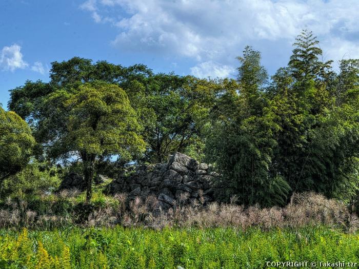 大溝の水辺景観2