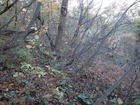 森を彷徨う