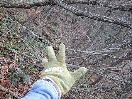 木が消えた!