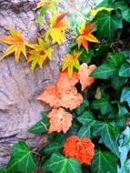 271212花のウォーク (4)