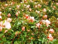 271212花のウォーク (18)