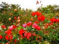 271212花のウォーク (19)