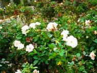 271212花のウォーク (21)