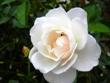 271212花のウォーク (22)