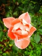 271212花のウォーク (25)