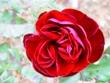 271212花のウォーク (26)