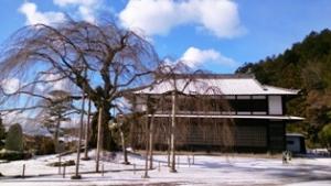 28-1-19舞台桜