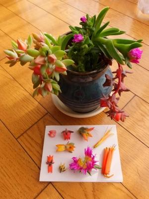 花持ちが良い(^◇^)多肉花の生け花オブジェ♪&多肉花の蜜の味は?2015.12.08