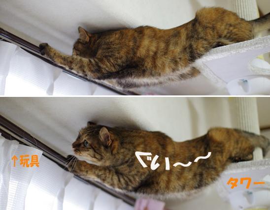 まだまだ忍者猫健在^0sきらら定 1のコピー