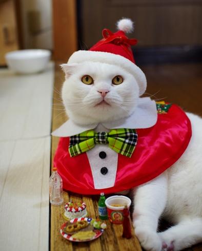 サンタさんお仕事前に一人宴会中