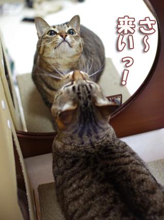 鏡の前で目ランラン^さだsだsのコピー
