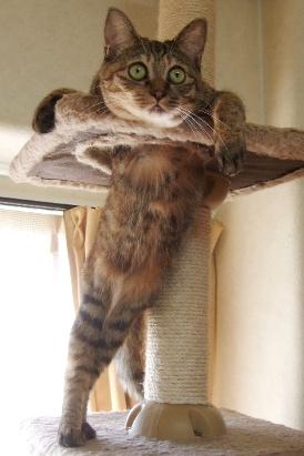 9 立ちながら考え中 子猫時代のキララ - コピー