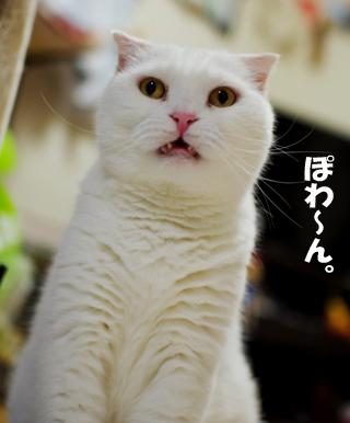ふれ^¥あs^だsだsだ