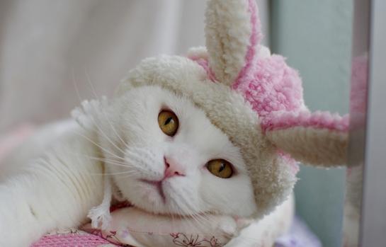 雪ウサギちゃんになっちょds