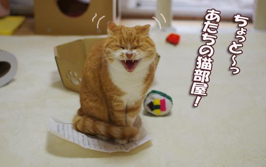 あたちの猫部屋^-あsd-あsd-あsだsdsだだsdのコピー