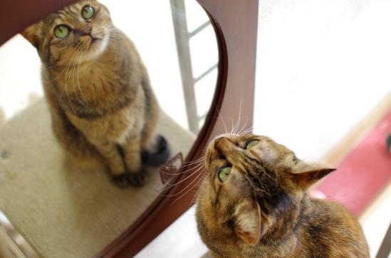 キララの鏡観察がまた始まった^¥あs-^¥だ