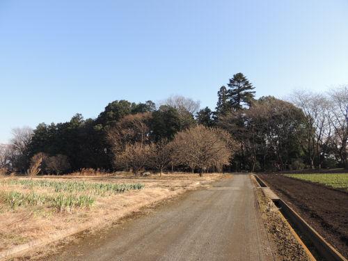 1115kashiwa09.jpg