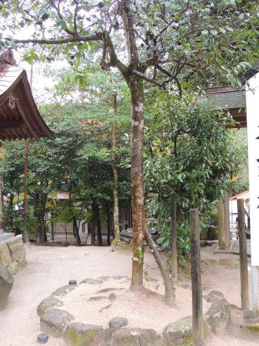 151210yaegaki43.jpg