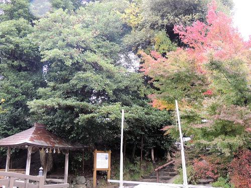 151210yaegaki47.jpg