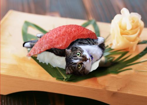 Leon-sushi.jpg
