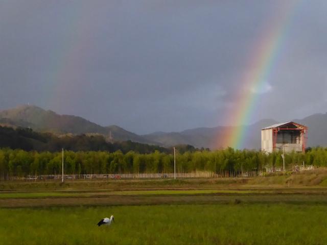 虹とコウノトリ