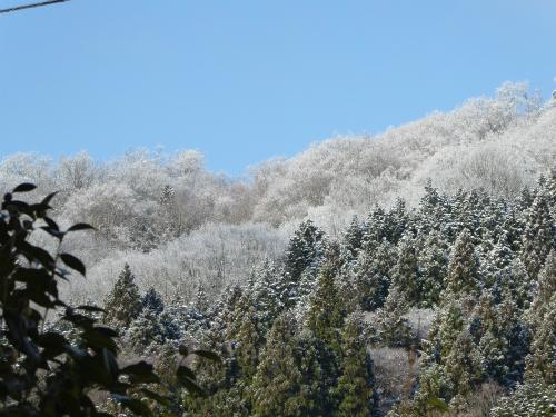 朝はうっすらと雪が・・・