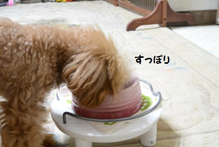 DSC_2211.jpg