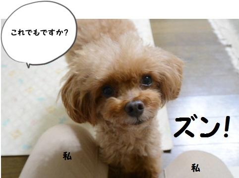DSC_2463.jpg