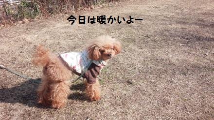 IMG_20160126_123809.jpg