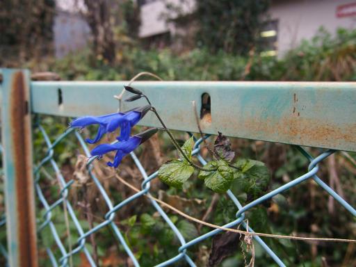 20151227・狭山湖散歩1-03