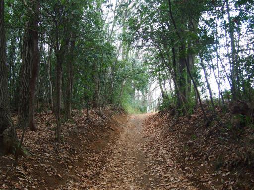20151227・狭山湖散歩1-11