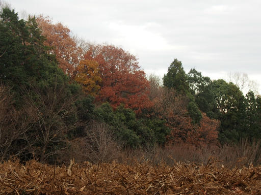 20151227・狭山湖散歩1-16