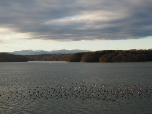 20151227・狭山湖散歩1-24