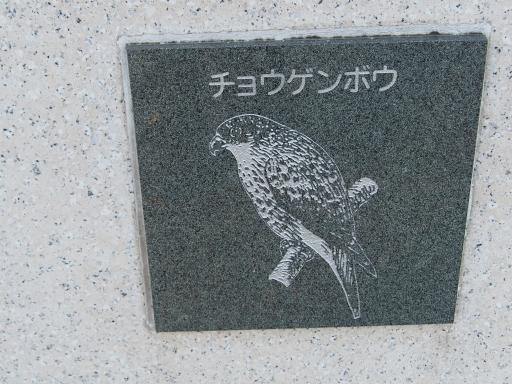 20151227・狭山湖散歩2-06・中
